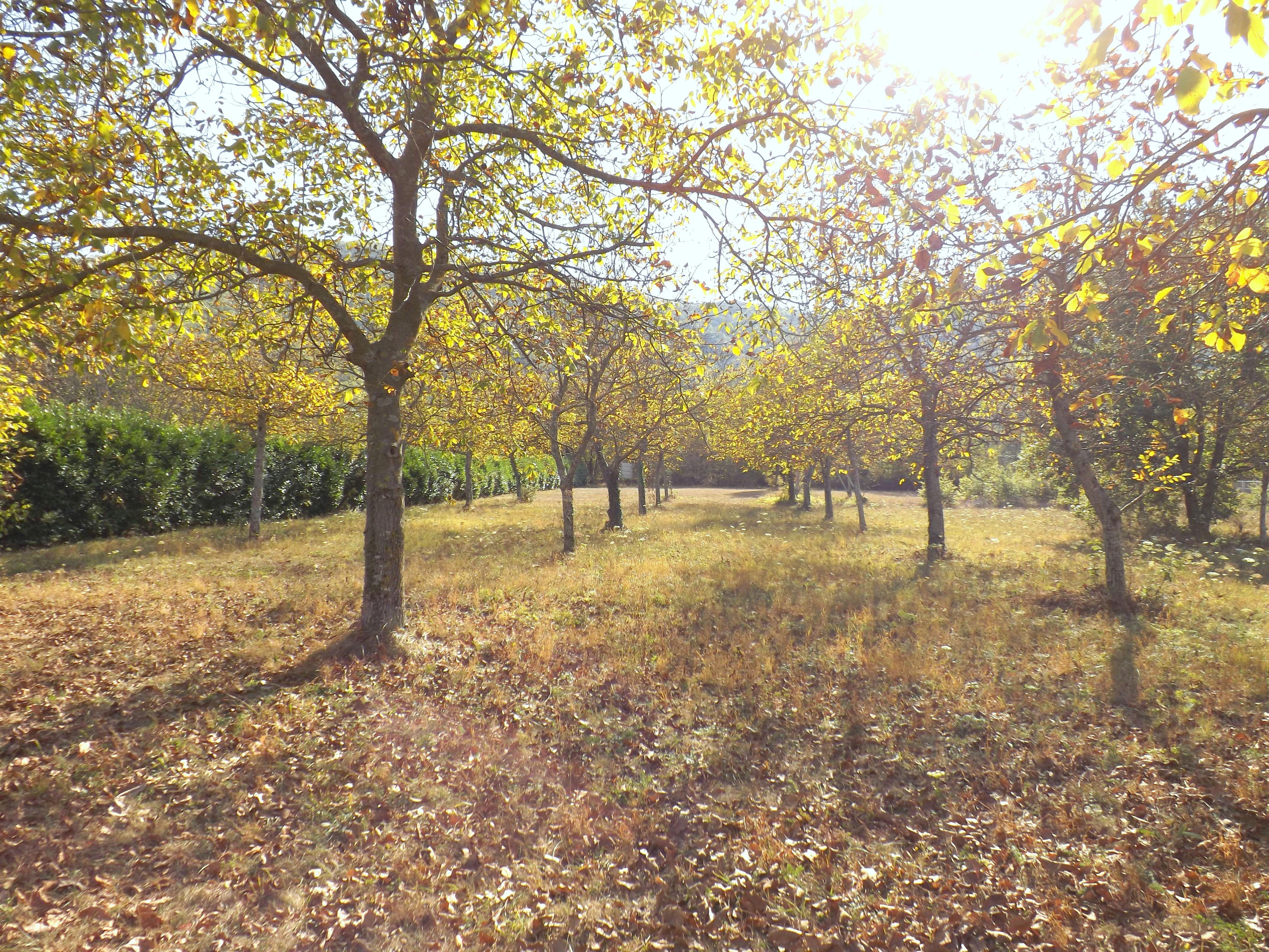 http://medias.aktifimmo.com/photos_immo_original/8217/8217057_1.jpg?1507909797